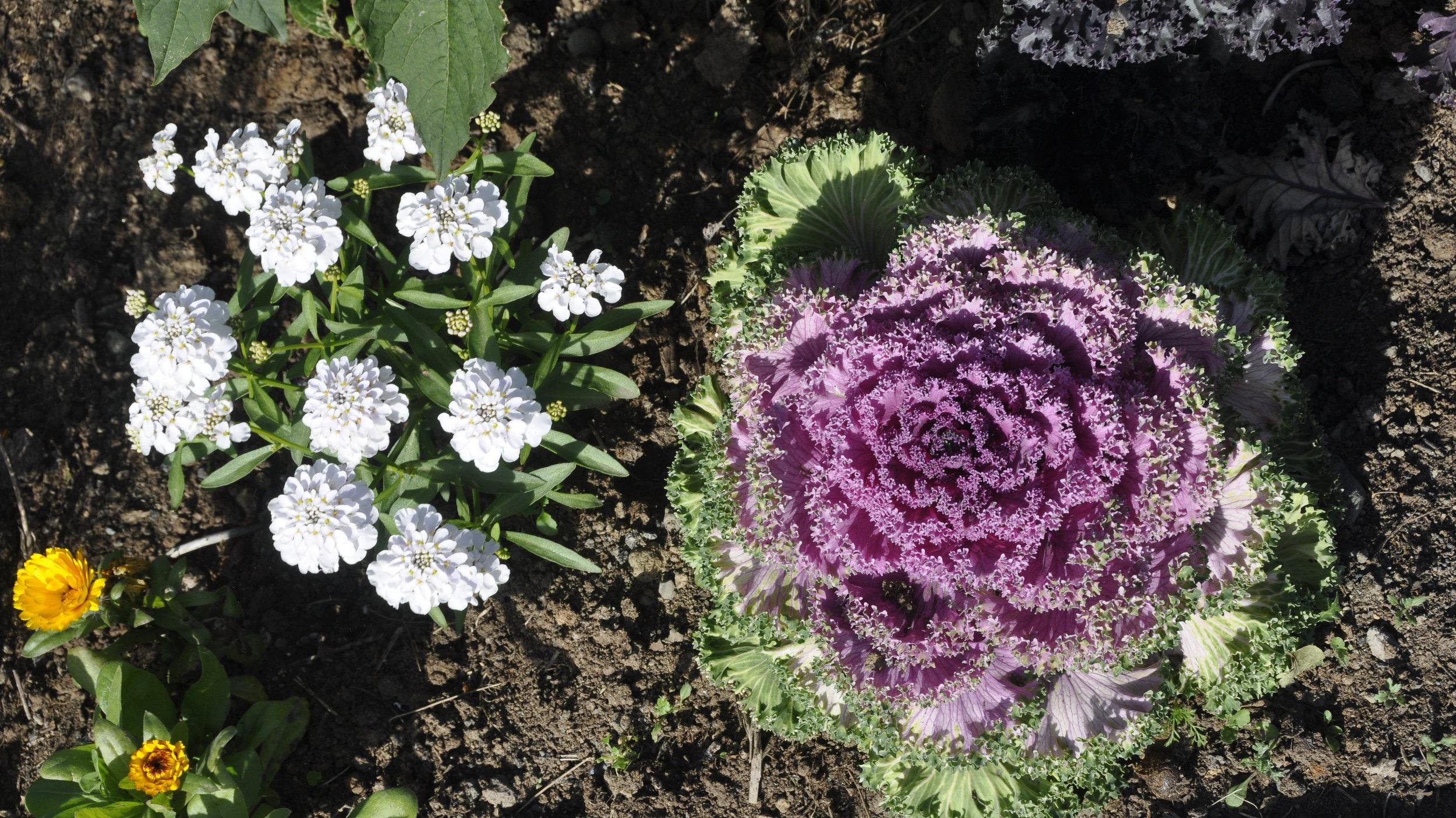 vegetable-garden-Lethbridge-Alberta.jpg