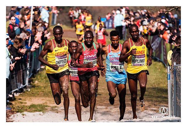 Cross country world championships is in town 🏃🏽♂️🏃🏼♀️💨💨 #moesgaard #aarhus #visitaarhus #cross #crosscountry #xc #worldchamps #color #colour #denmark #run #running #aarhus2019 #mud #splash #fujifilmxt3 #xf50140 #fujifilmnordic #myfujilove #repostmyfuji #xh1 #xf1655 #ethiopia #uganda #kenya #nike #nikerunning #adidas #adidasrunning @mikkellerrunningclub