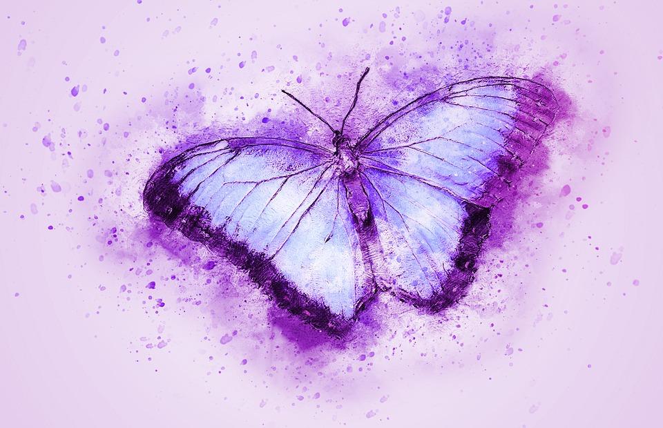 butterfly-2265010_960_720-2.jpg