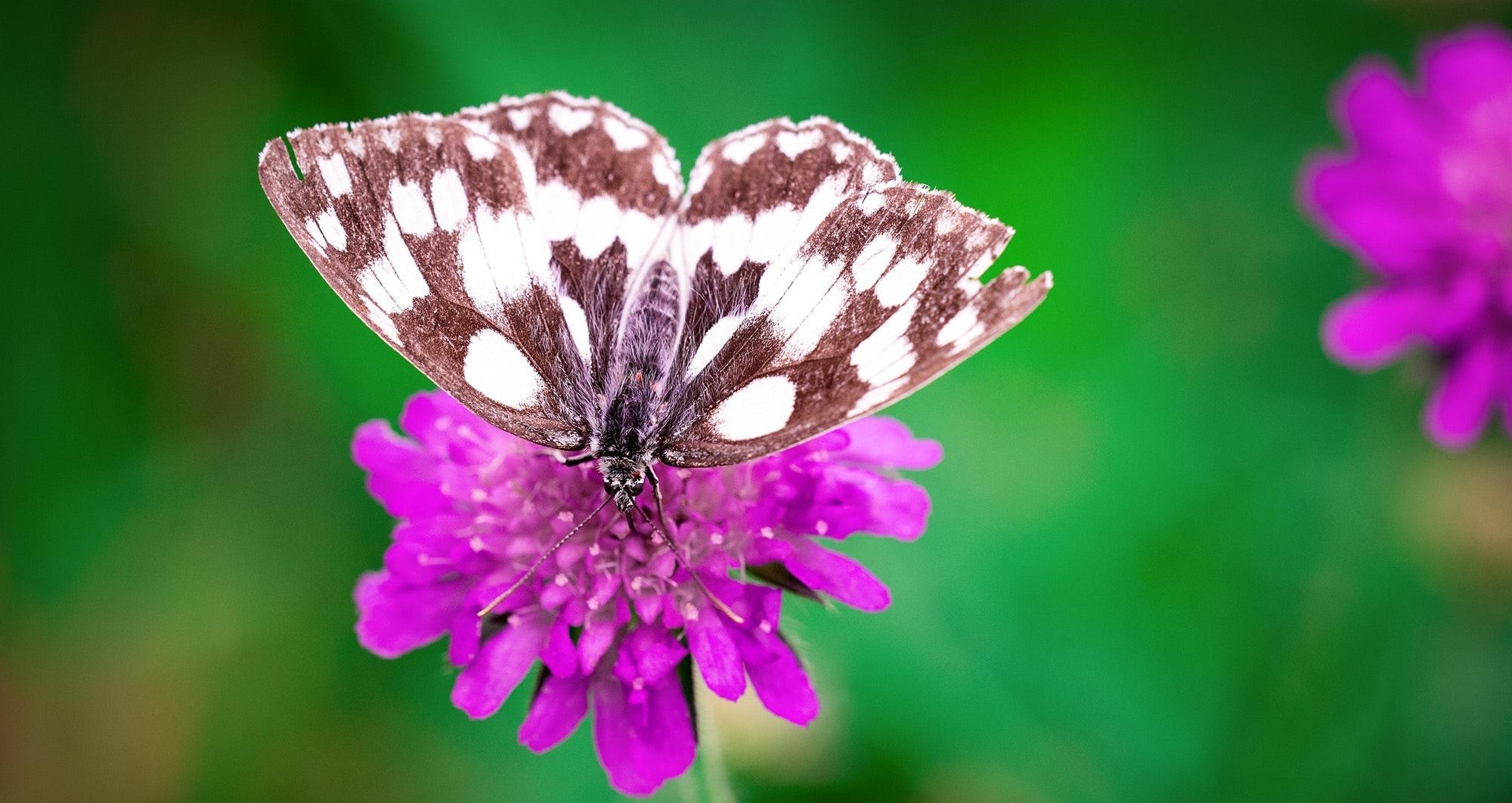 bloom-blossom-butterfly-162229.jpg