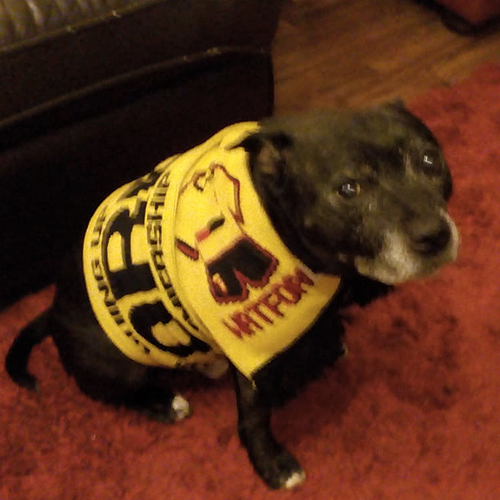 Our Georgie is 11 years old and Watford's biggest fan - Lyn