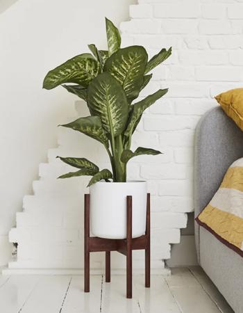 Dana plant, £35, Patch