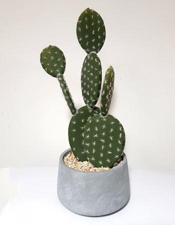 Cactus in cement pot, £35, La Redoute