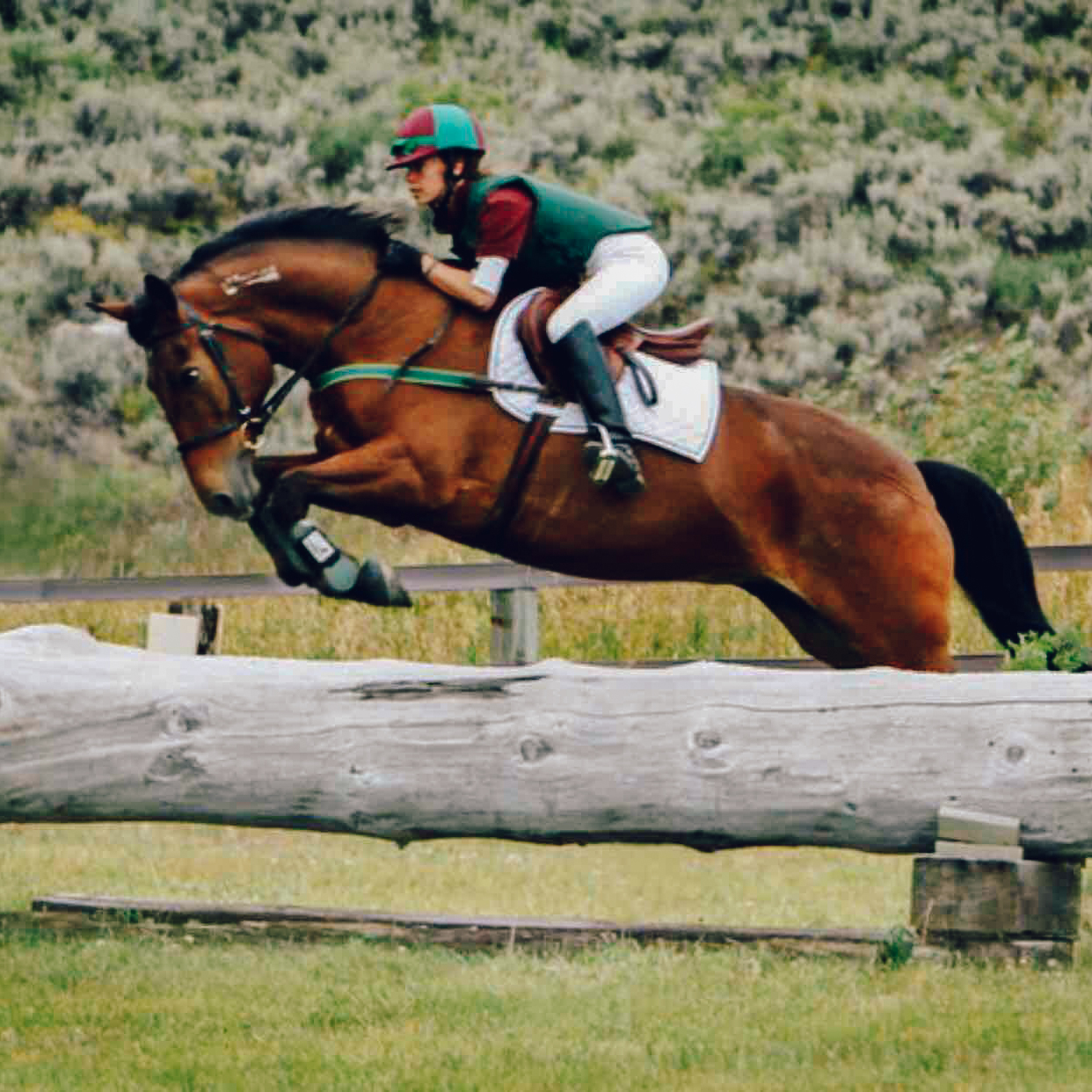 BSR Horses-1.jpg