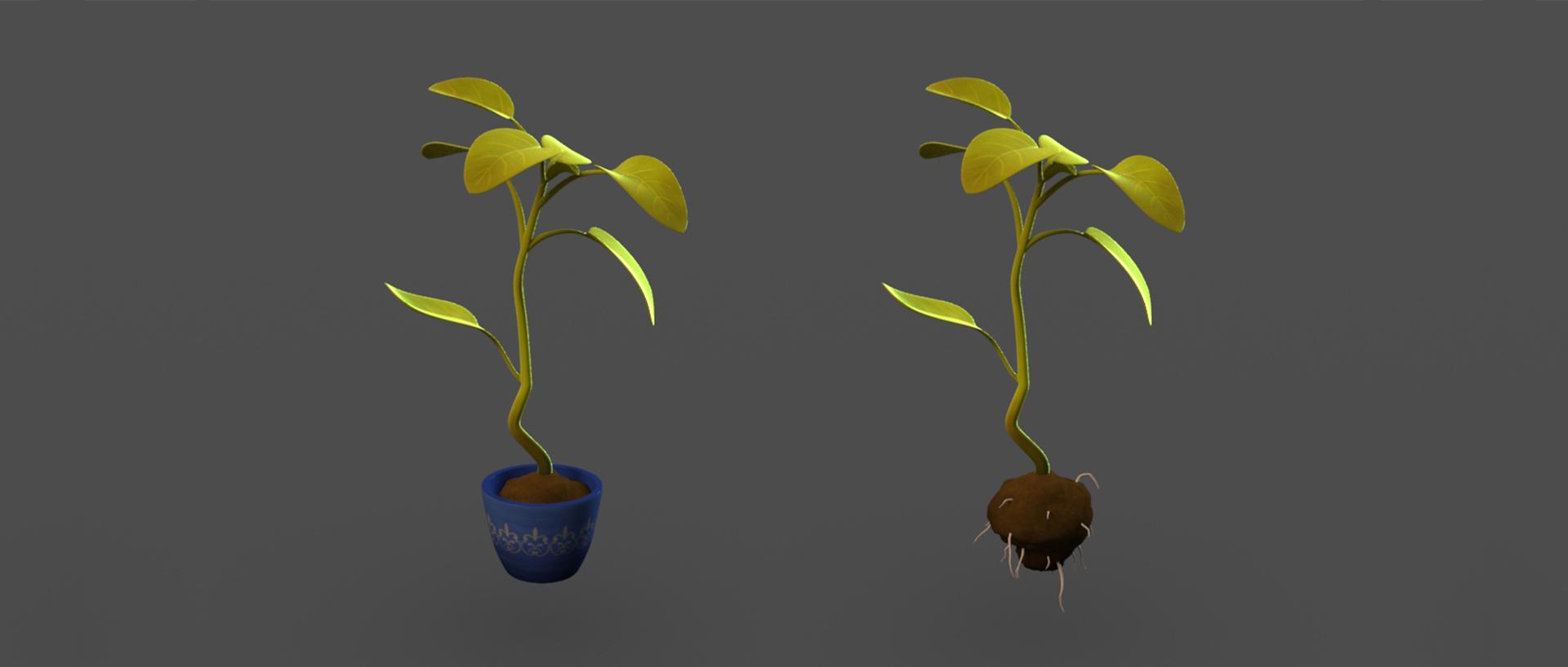 plantC.jpg