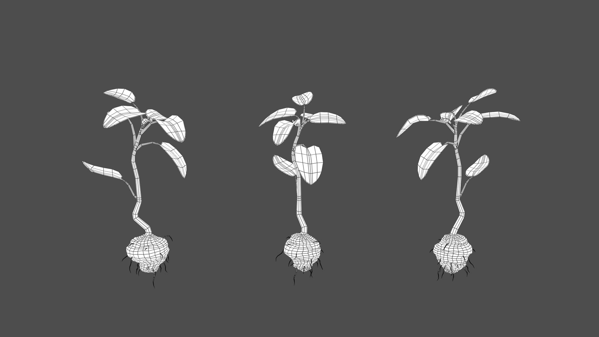plantA.jpg