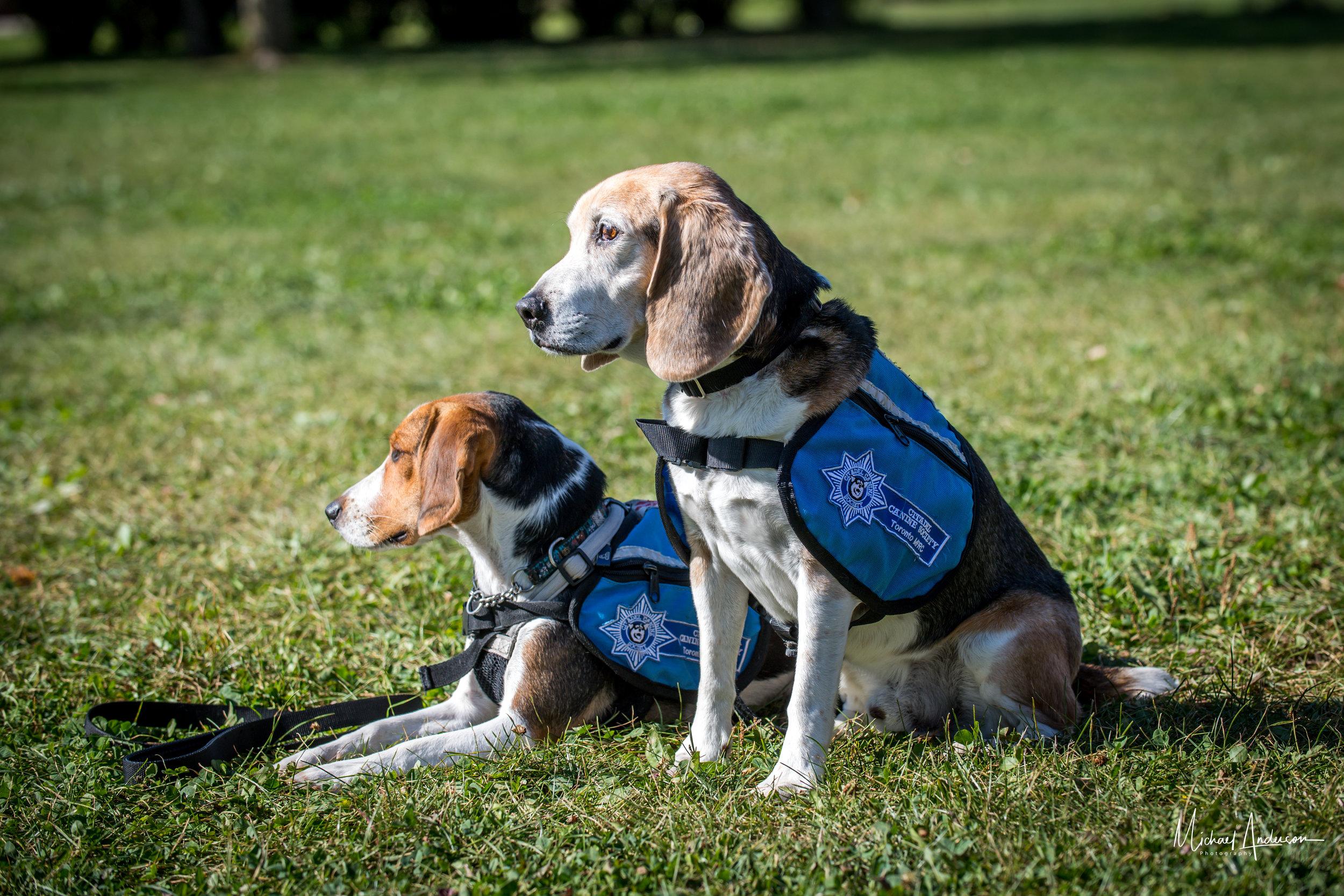 Citadel Canine Society Service Dogs 3.jpg