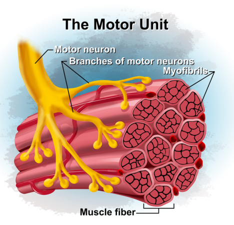 book-motor-unit.png