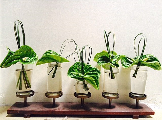 Anthurium Plant Clippings, Creative Grass Loops, Grass Drinking Jars, Decorative Candle Holder
