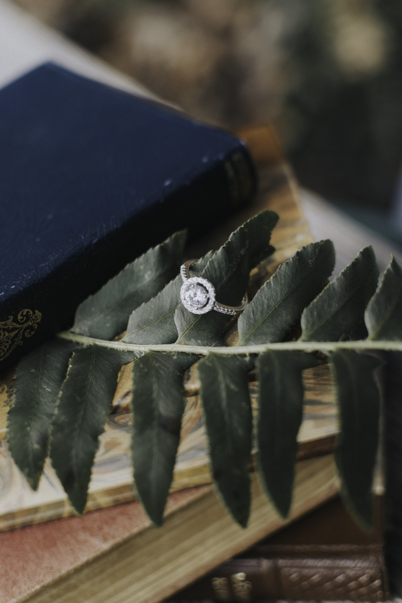 Cate_Ann_Photography_Dayton_Ohio_Wedding_Elopement_And_Engagement_PhotographerDSC_5728.jpg