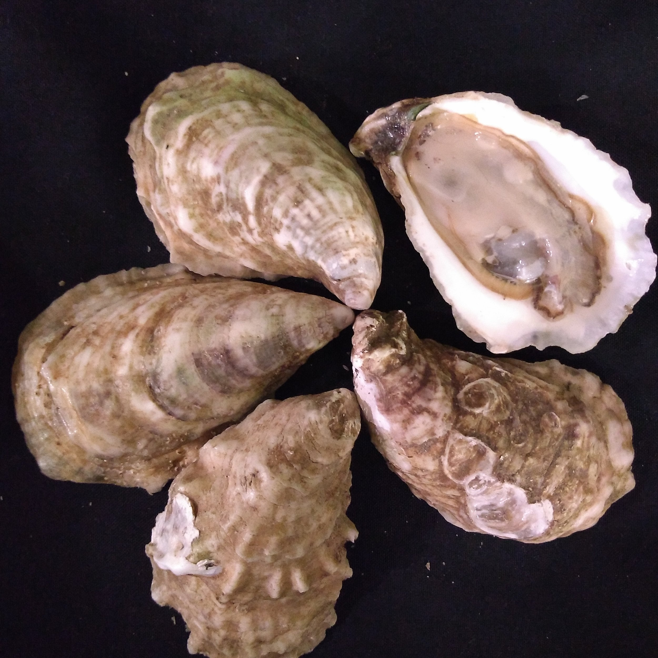 four+oysters.jpg