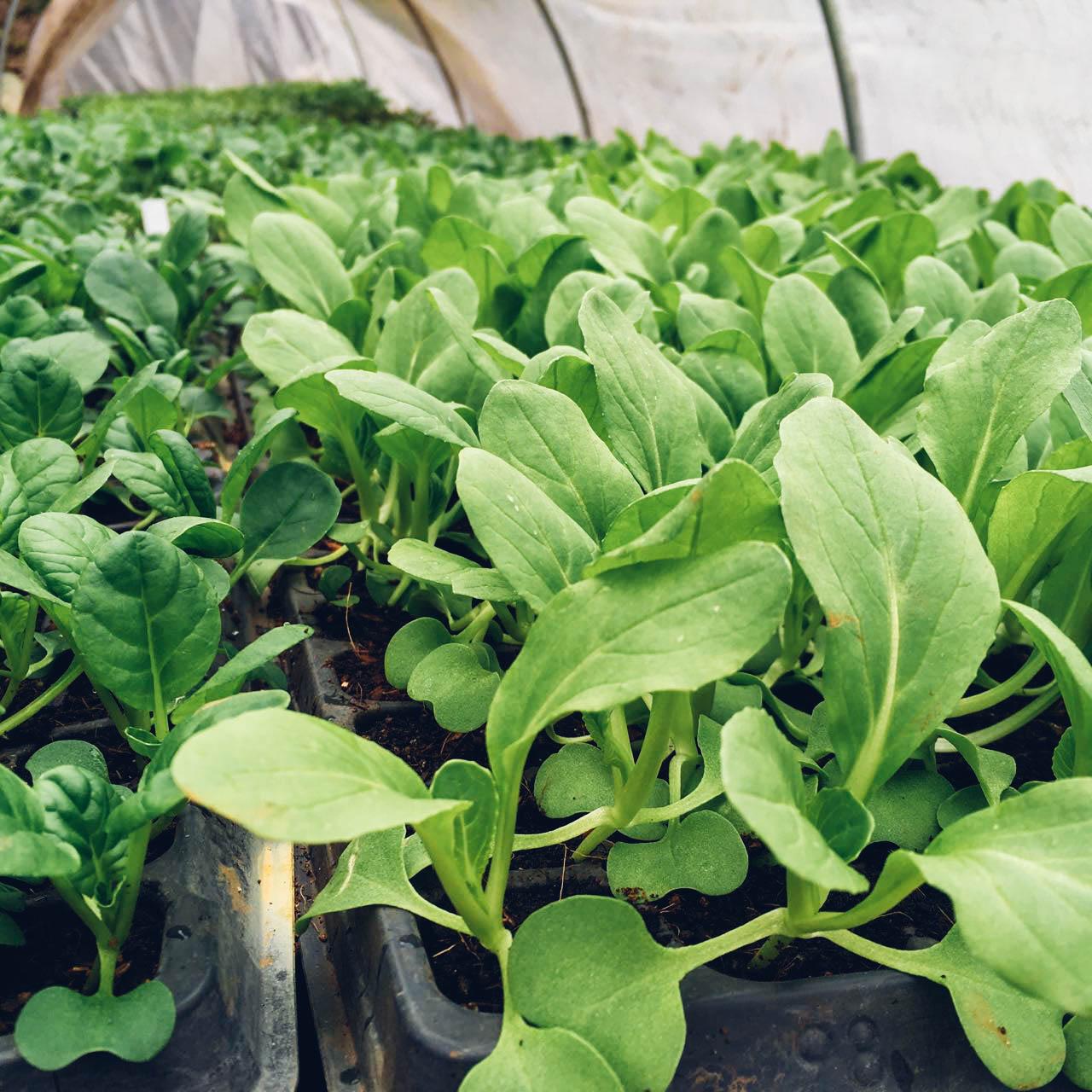POTTING MIXES - PRECISION MIXES YOUR PLANTS DEMAND