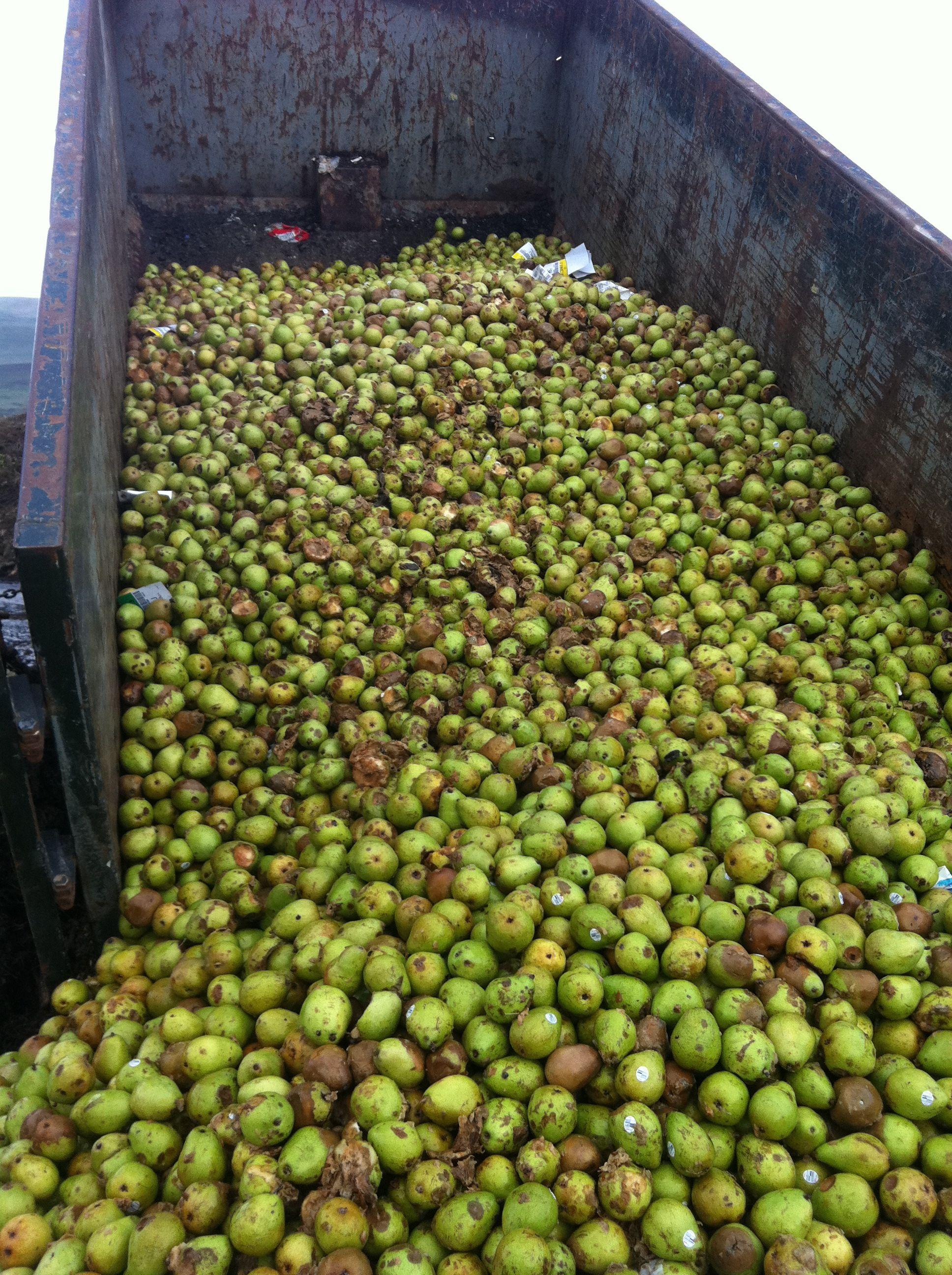 feedstocks fruit.jpg