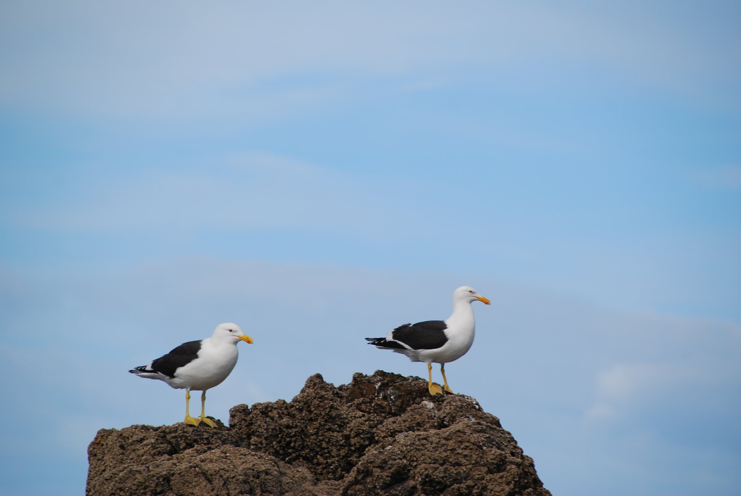 Birds_020.JPG