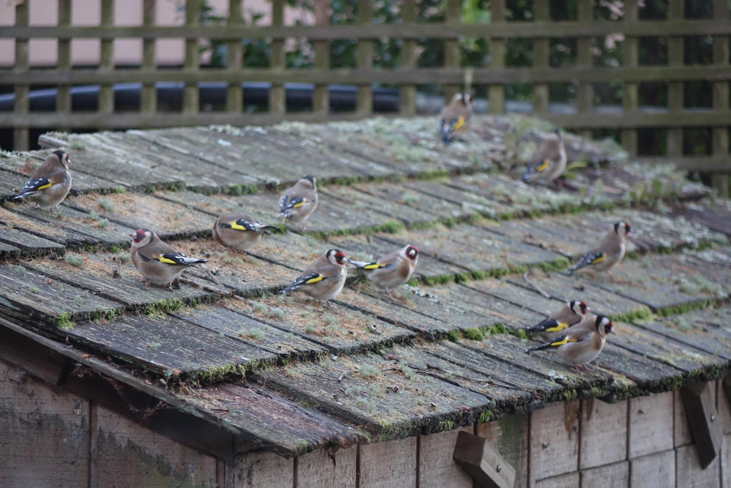 Birds_035.JPG