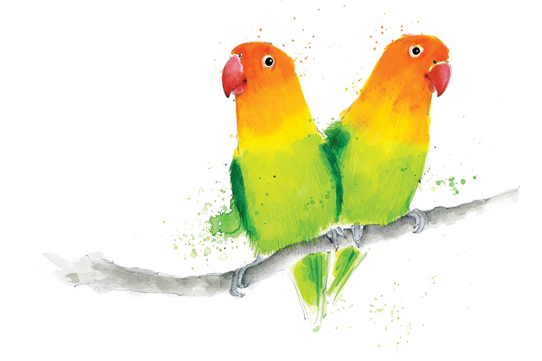 beckybrown-website-lovebirds.jpg