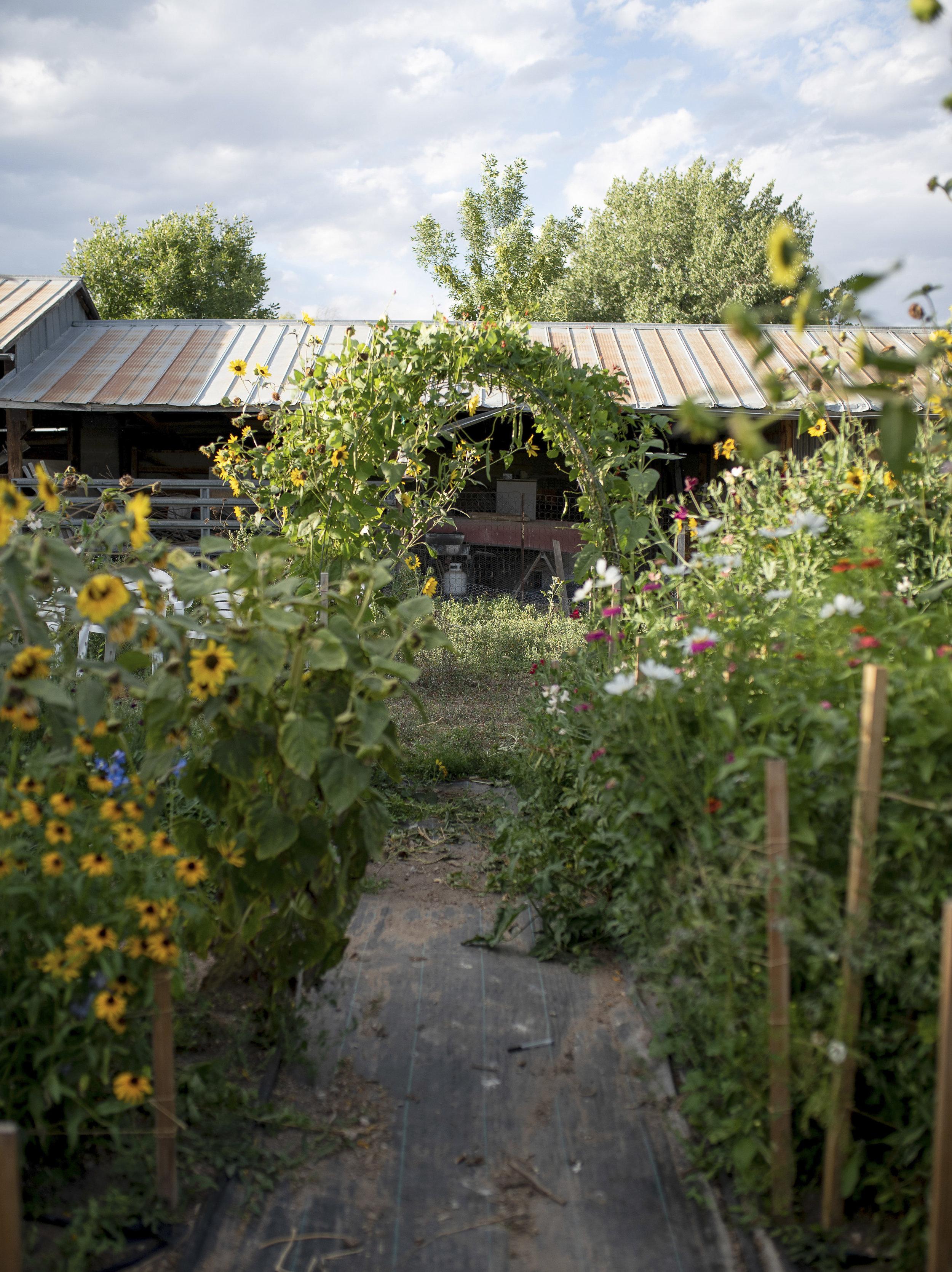 Emily_Rose_Flower_Farm.jpg