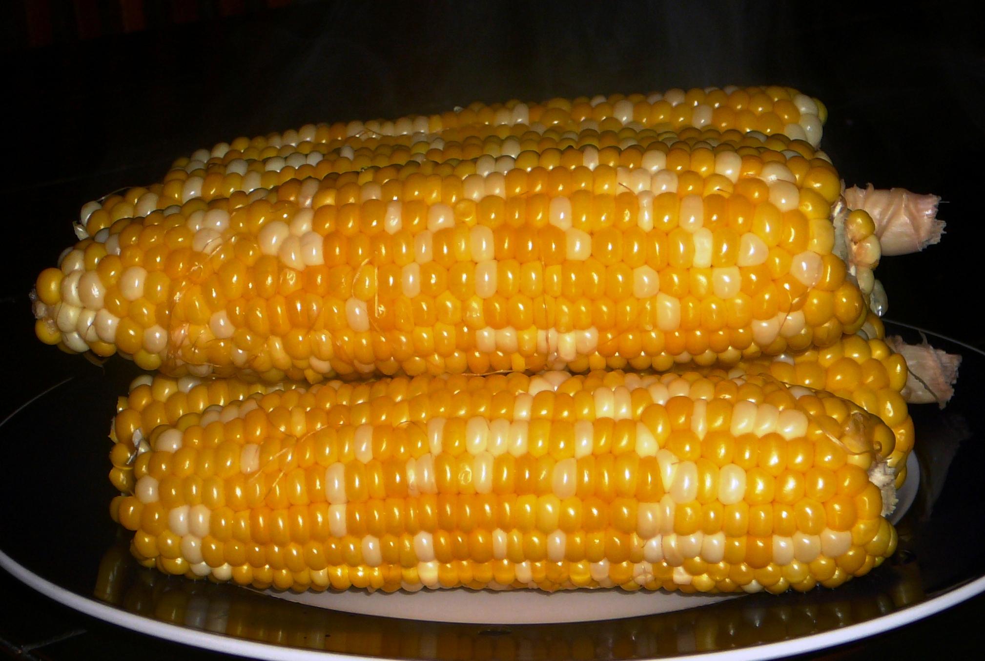 cobs of corn.jpg