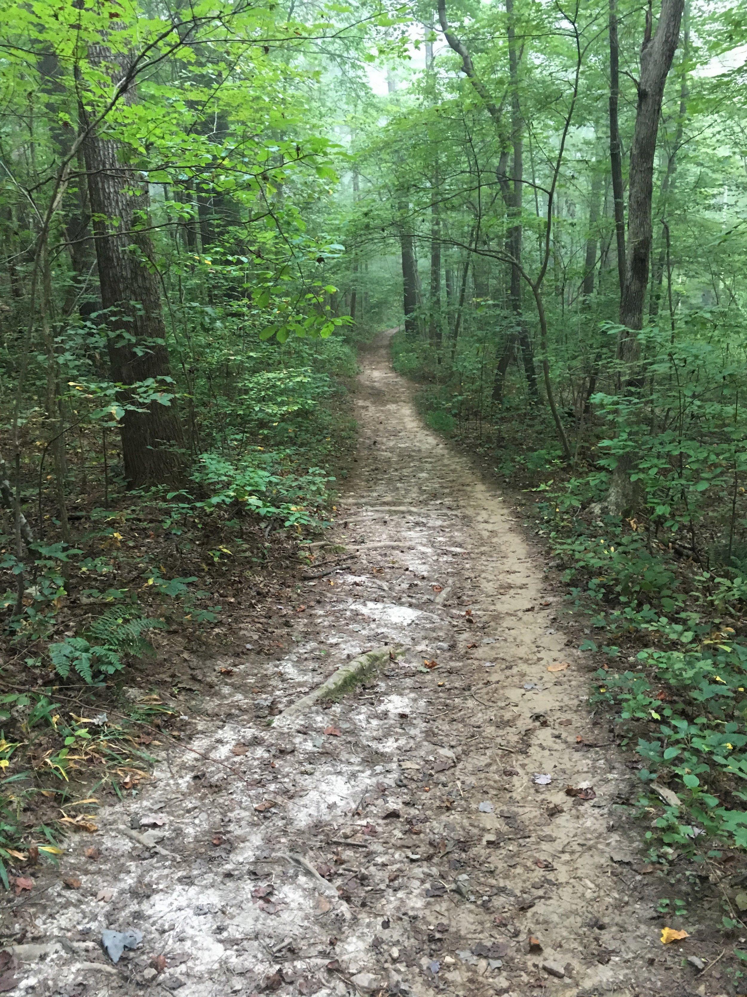 path 2.JPG