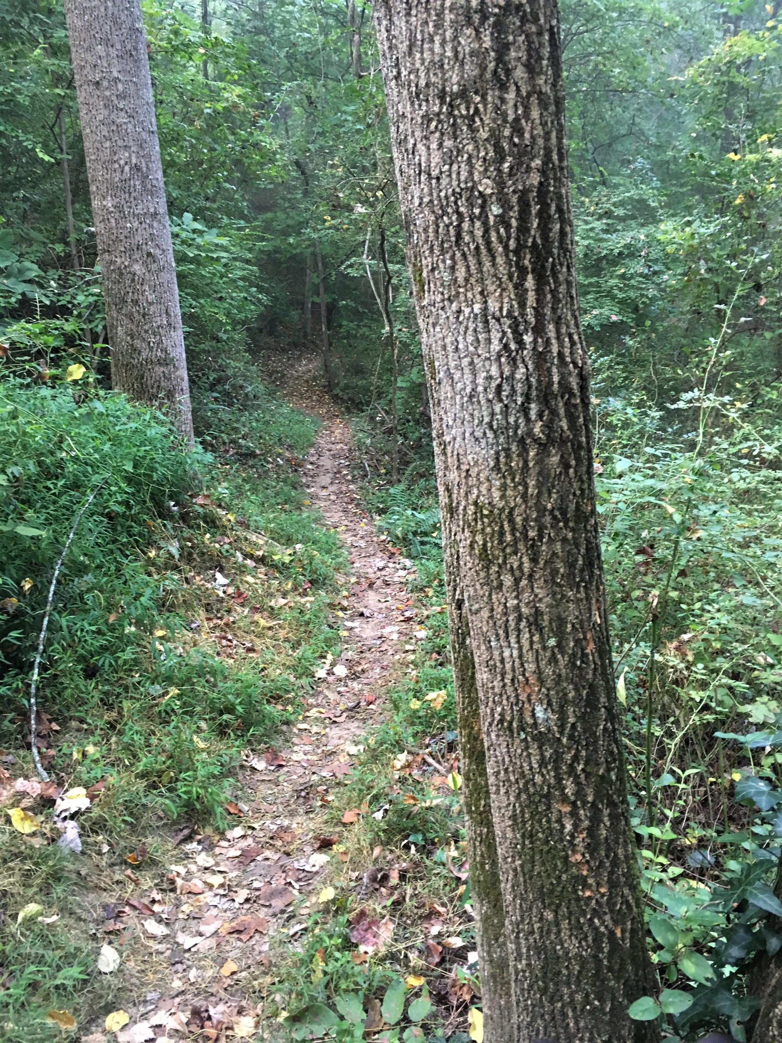 path 1.JPG