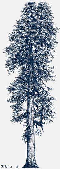 tree550.jpg