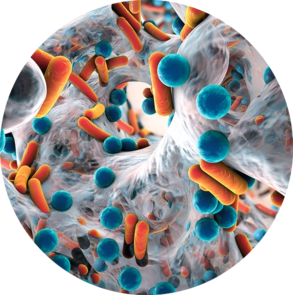 IMMUNE support AND ANTIMICROBIALS -