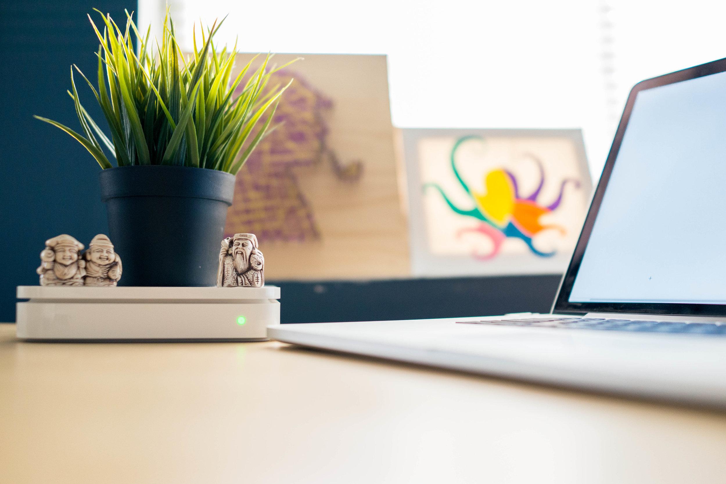 Desk-plant-pexels-photo-436784.jpeg