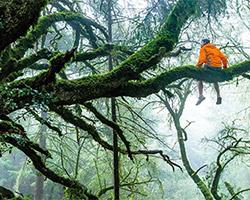 tree-sitting-sm.jpg
