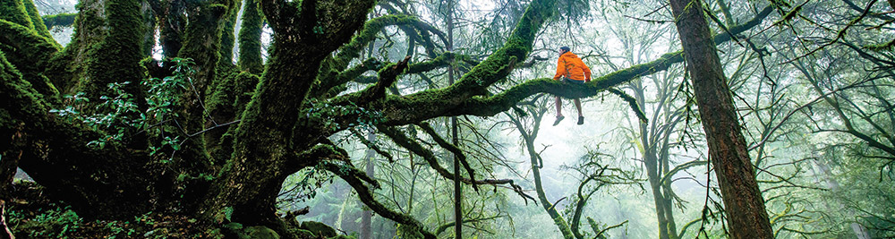 sitting-tree.jpg