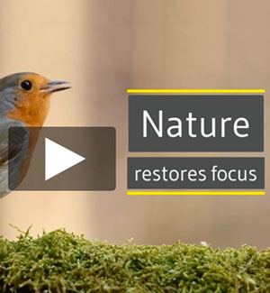 MARCH : Restore focus with a spring nature practice