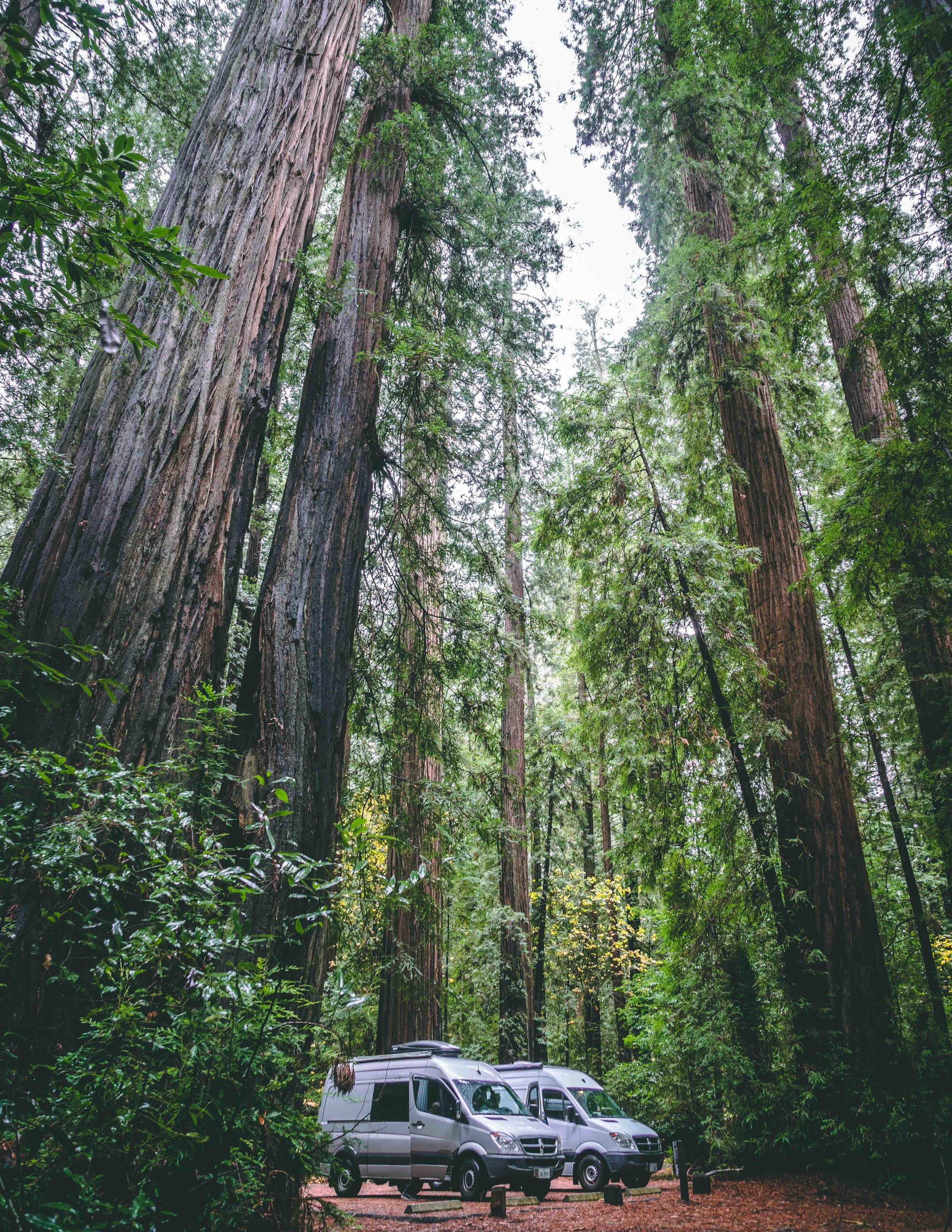 Giant Redwoods, CA