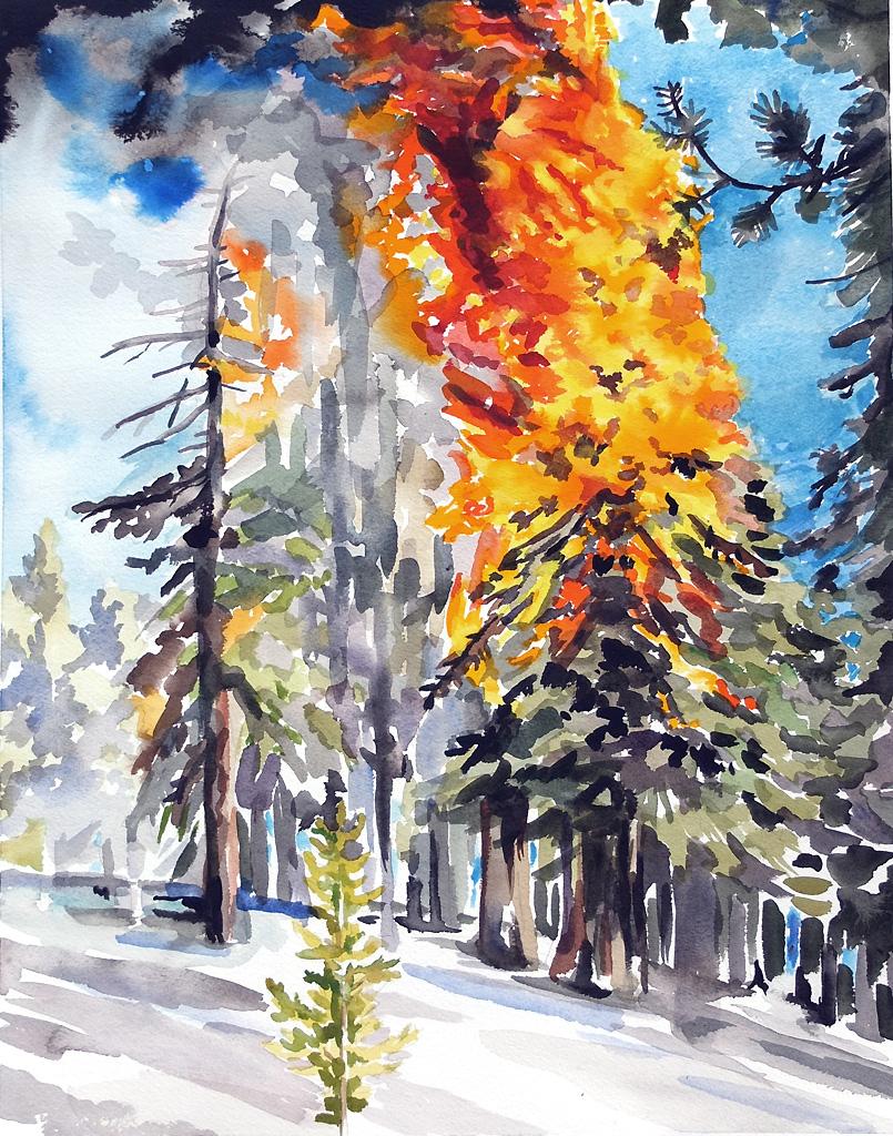 """""""Burning Pine"""""""