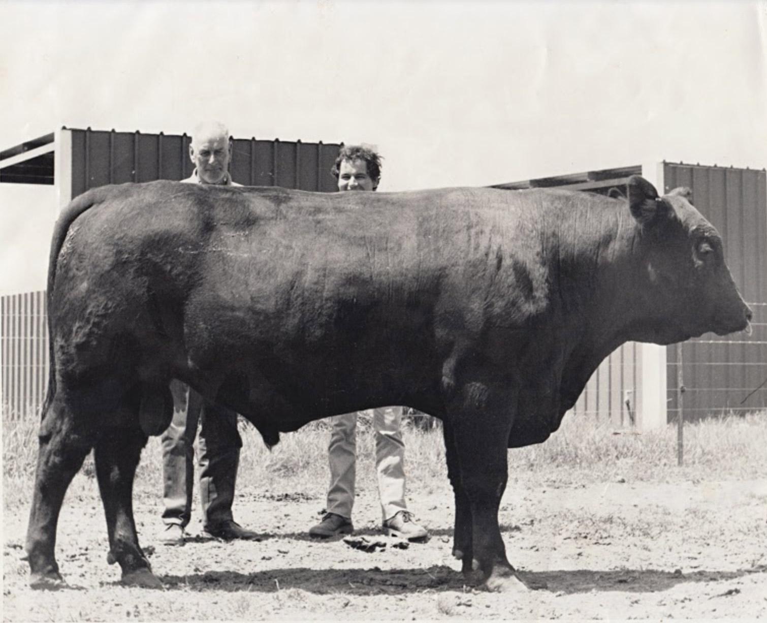 Roy Wickham and Gerald Archer 1984