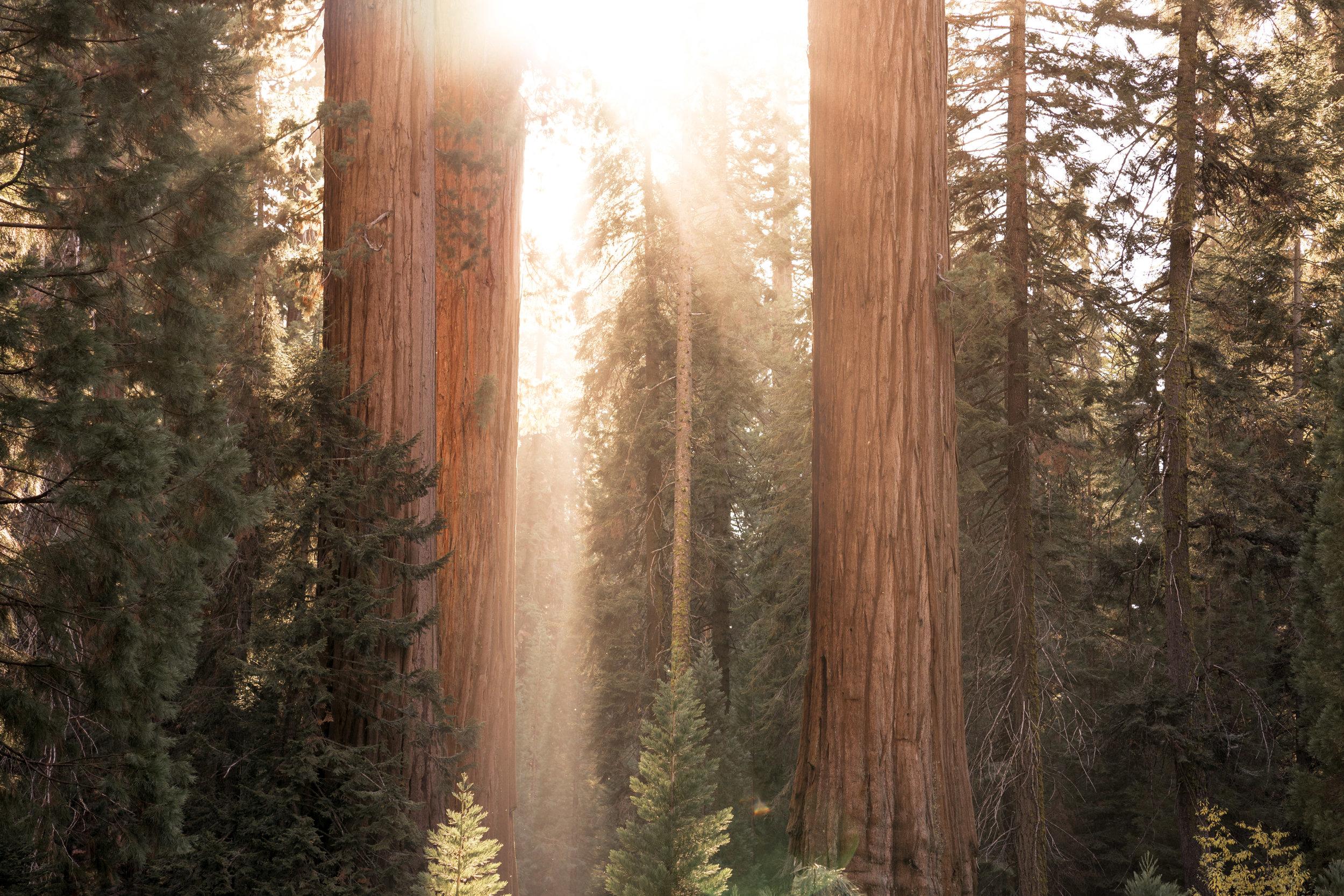 SEQOIA NATIONAL PARK, CALIFORNIA