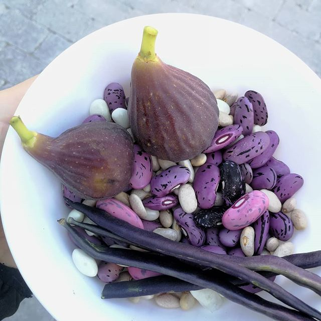Autumn colors and harvest in October 🍁🍂 ☺️ #autumn #colors #purple #beans #octobercolors #autumnharvest #foodart #food