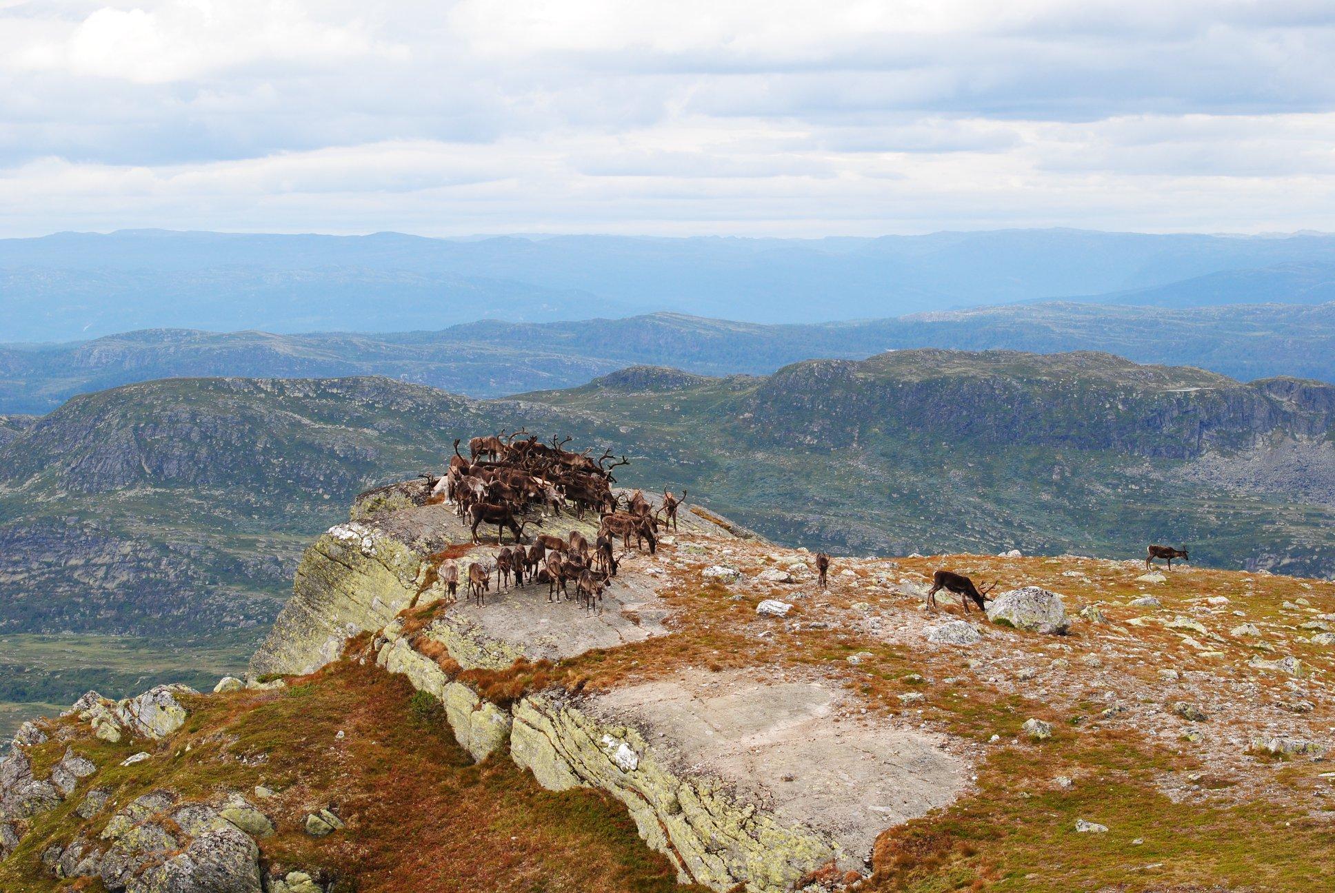 Høgevarde - 1393 moh