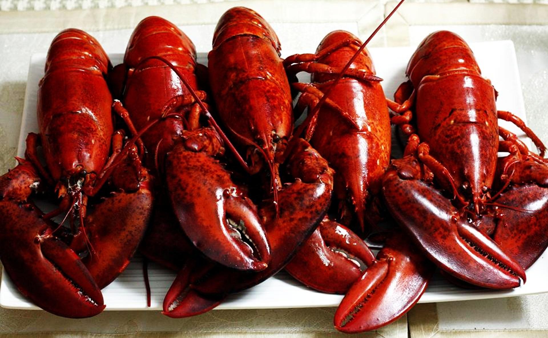 lobsters-2916160_1920.jpg