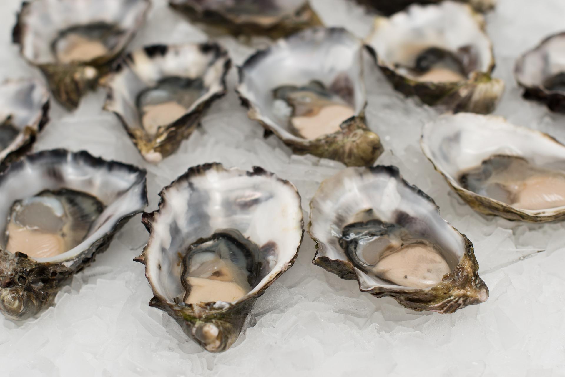 pearl oysters.jpg