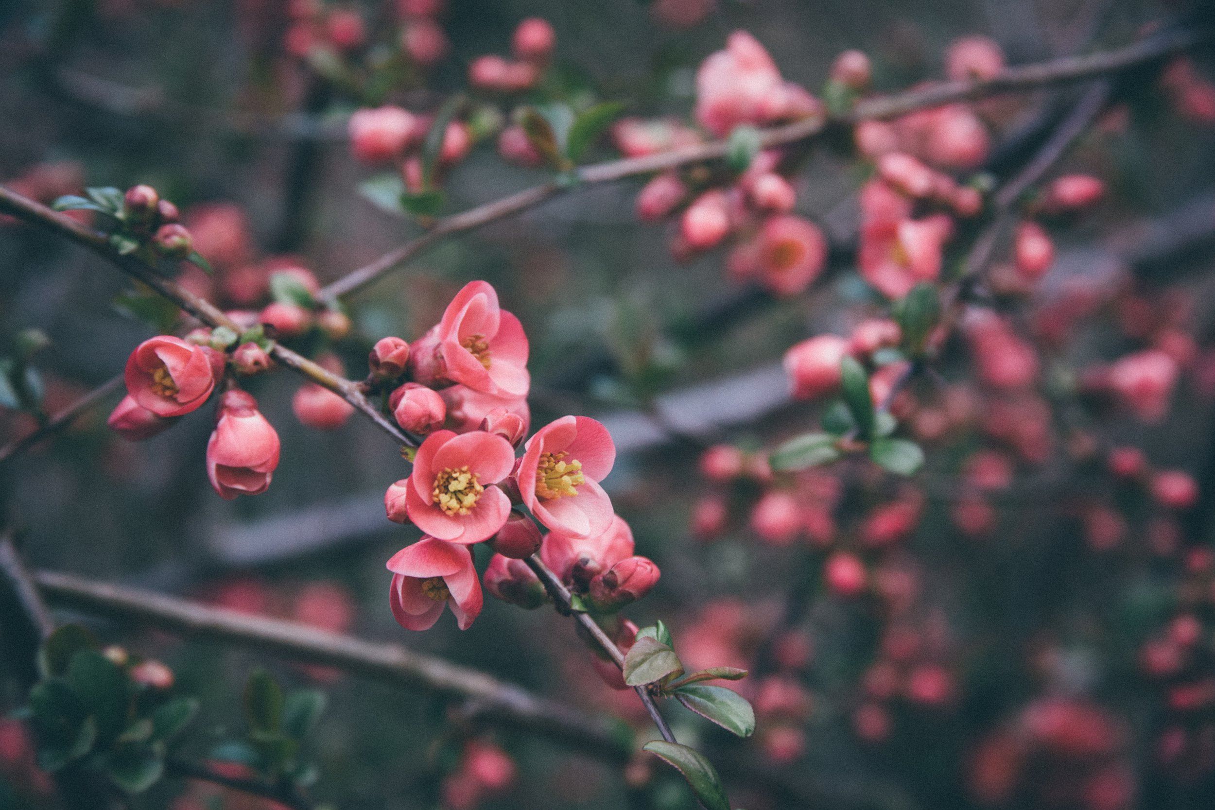 Dearest Readers, - It's a pleasure to welcome you to Balance Garden. Today is our launch day and it feels exciting to be out in the world at last, especially at this time of new beginnings and the promise of Spring just around the corner.
