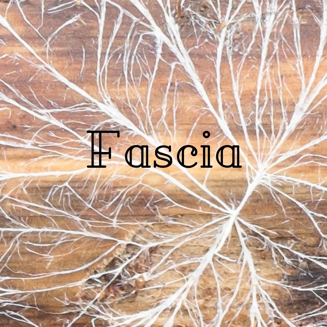 fascia.jpg