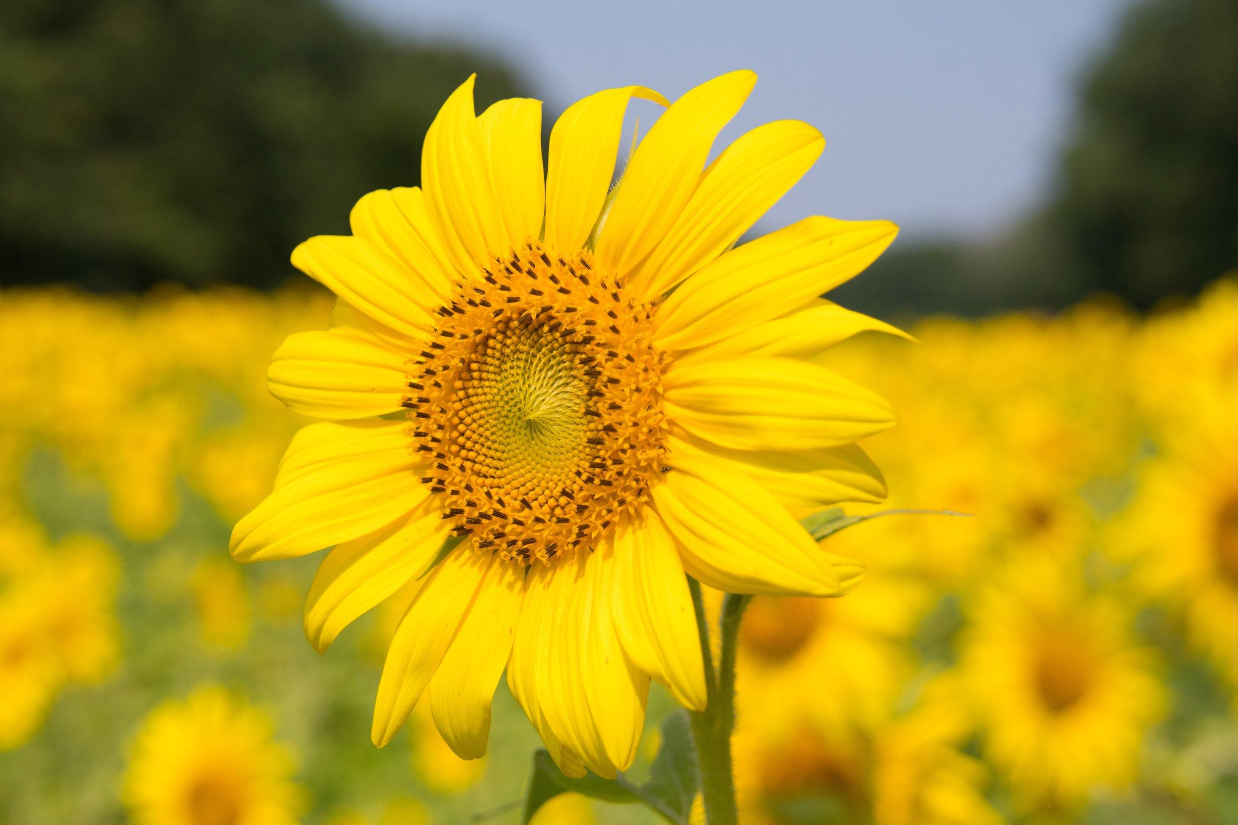 bloom-blossom-delicate-635529.jpg