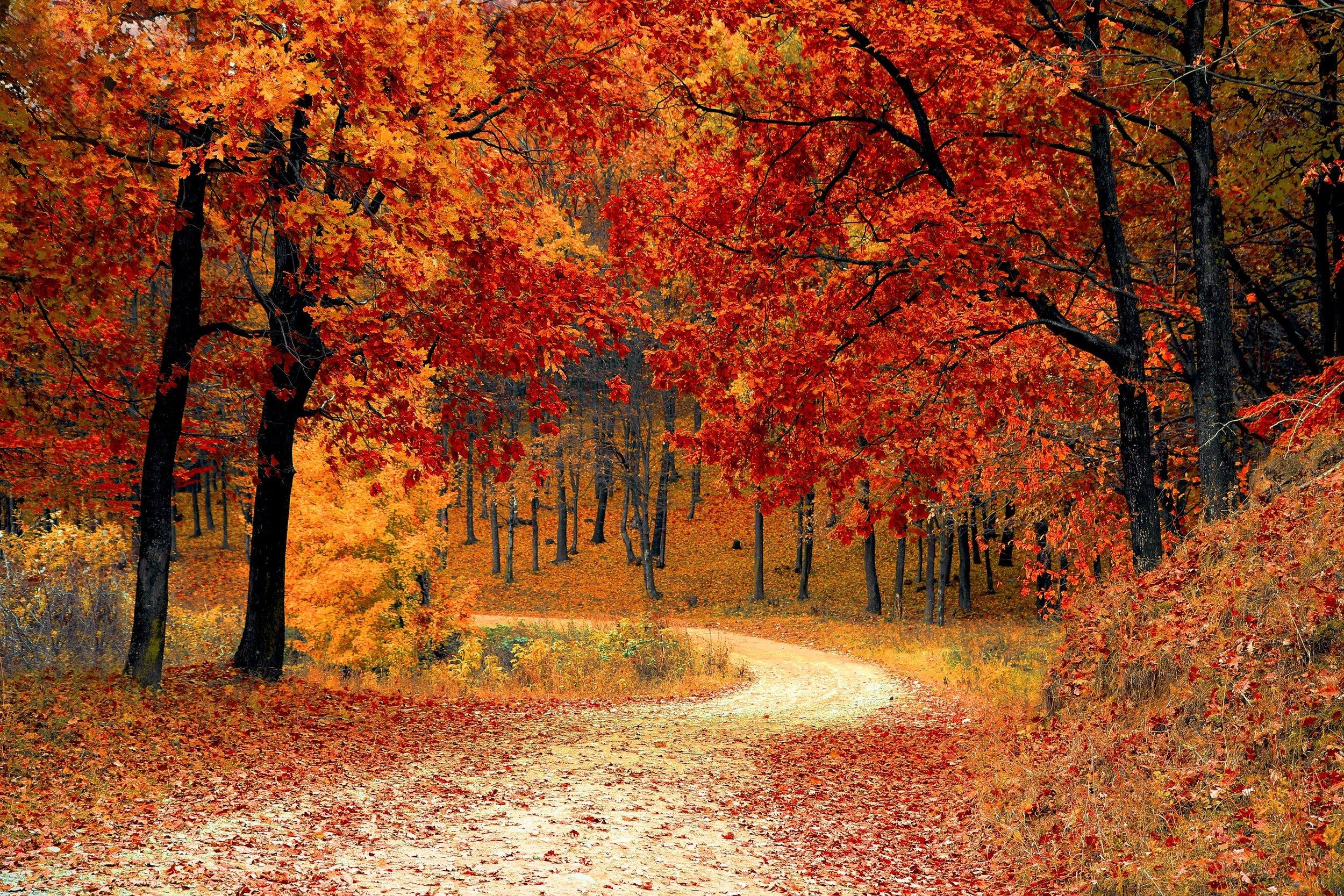 autumn-colorful-colourful-33109.jpg