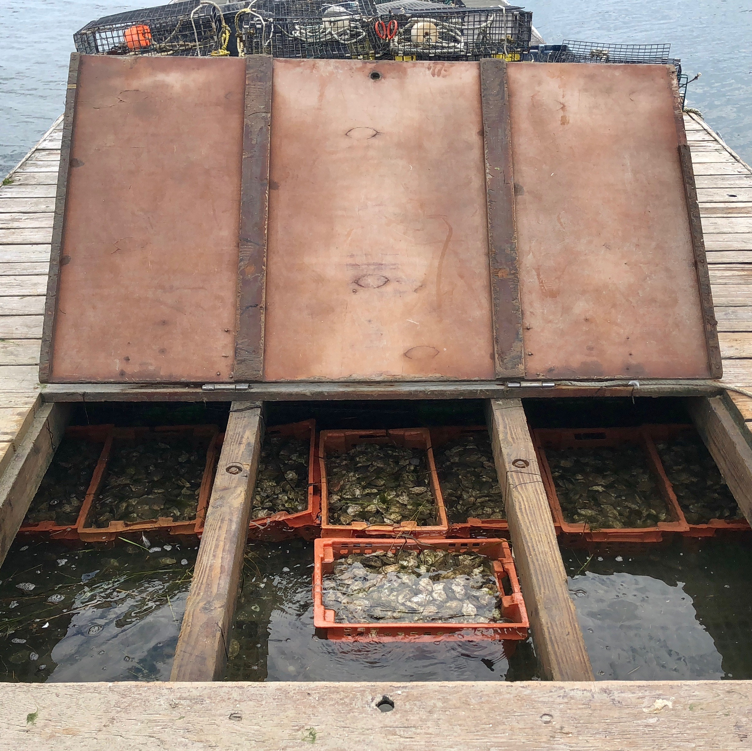 "The ""soaker"" onboard the Oysterplex stores to-be-culled and culled oysters."