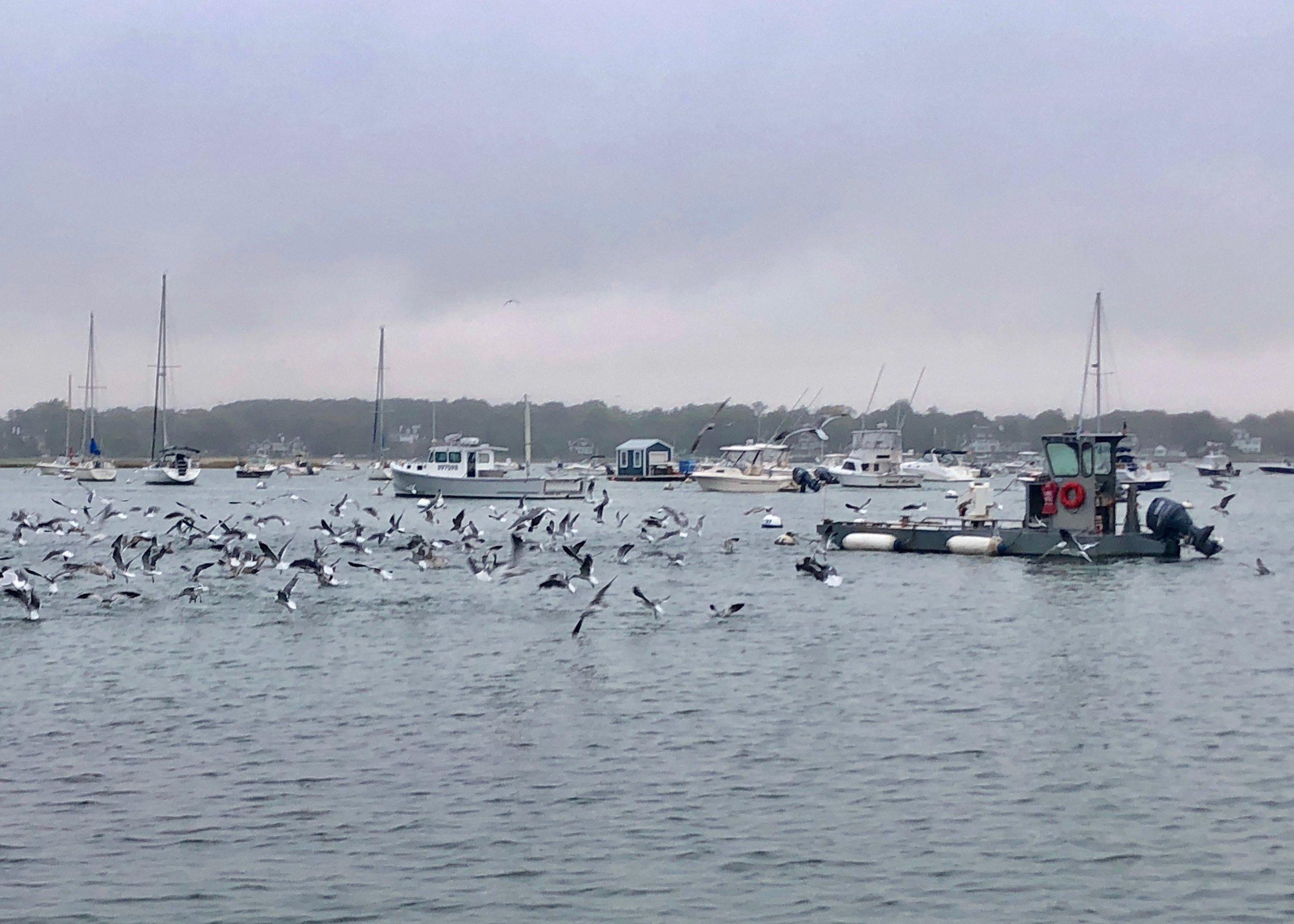 100418 seagulls.jpg