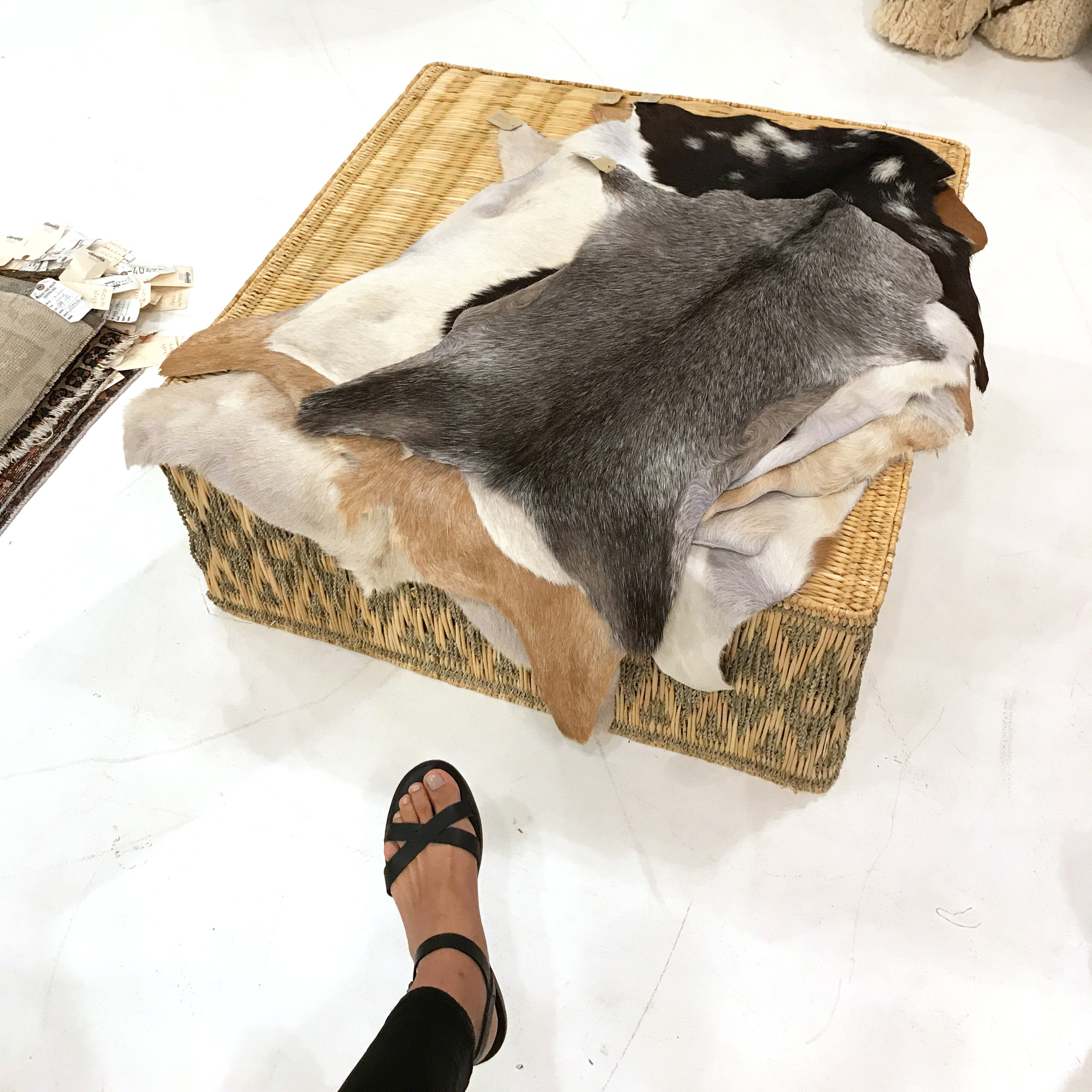 Goatskin Hides - $95 |  GREAT FOR:  Kids' rooms or as a runner in a narrow hallway  I added my foot for size reference. These goat hides are adorably mini!
