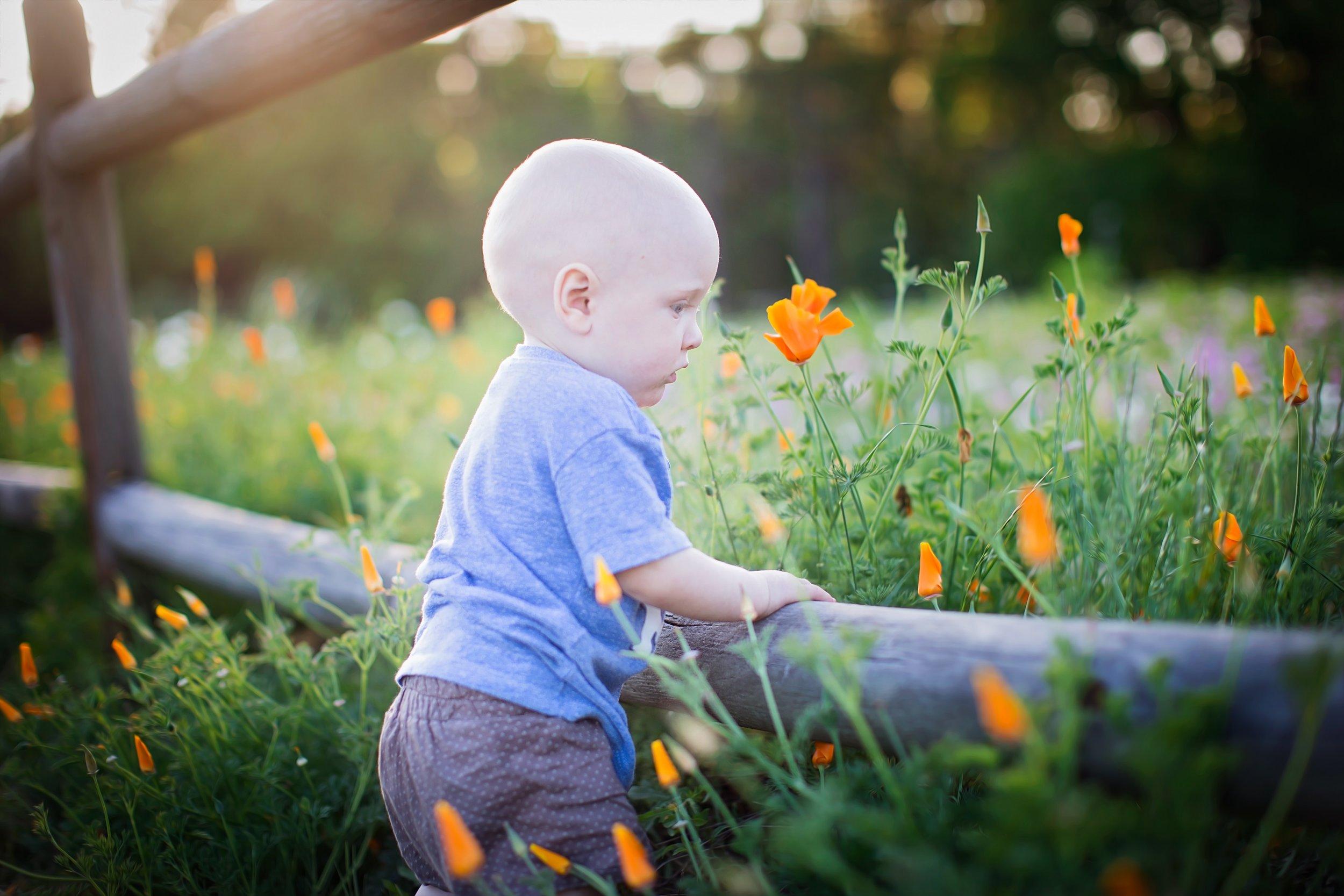 baby-flower-field-orange-poppy-390616.jpg