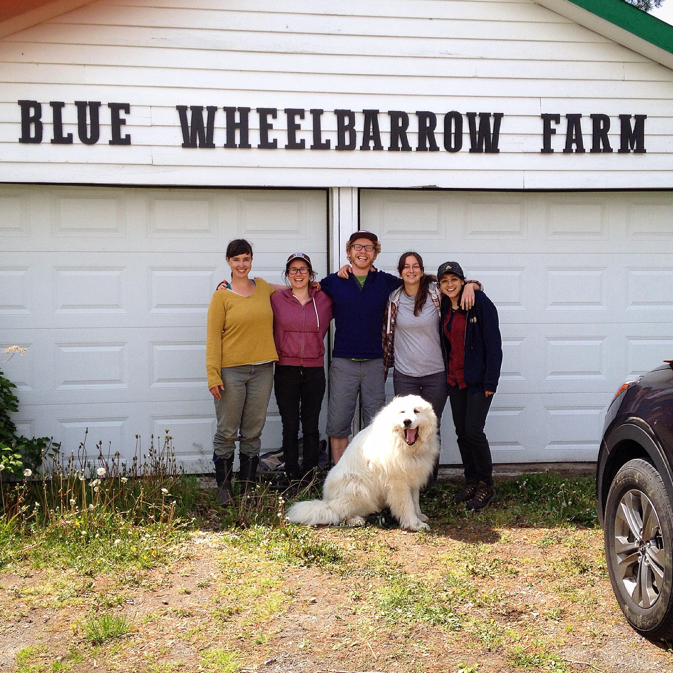Blue Wheelbarrow.JPG