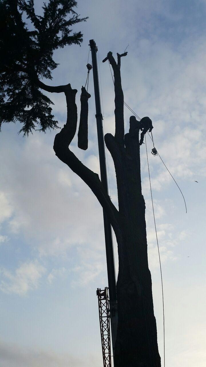 Craning timber.