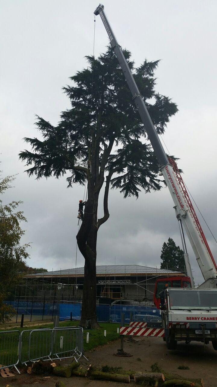 Technical crane job.