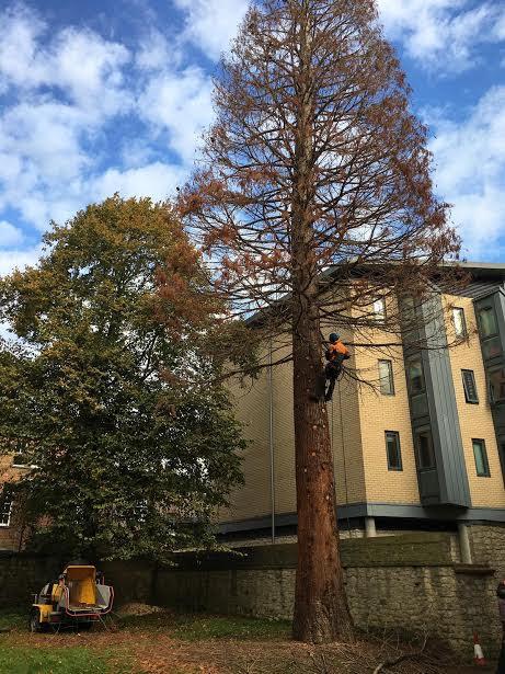 Before - Felling of dead tree.